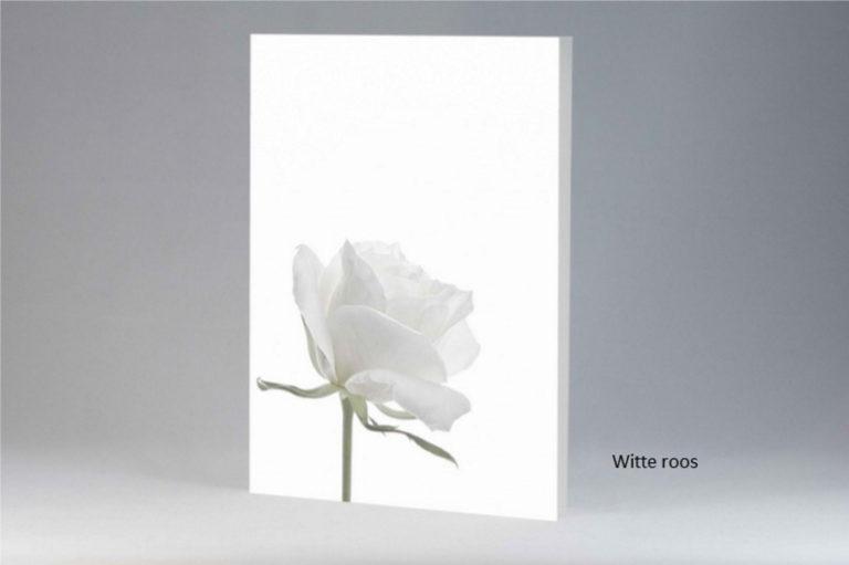 kaart_witte-roos
